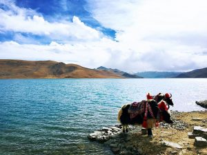 10 Days Lhasa to Tibet Everest Base Camp and Namtso Lake Group Tour. Day 4_Yamdrok Lake