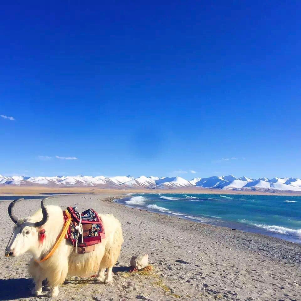 10 Days Lhasa to Tibet Everest Base Camp and Namtso Lake Group Tour. Day 9_Namtso Lake_insta
