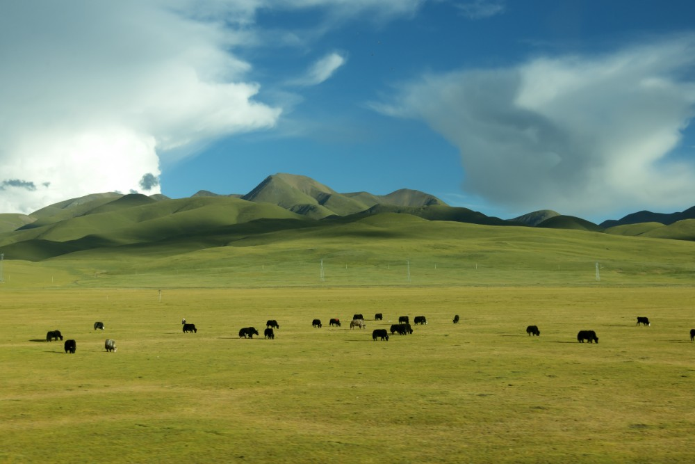 16D15N Lhasa to Xinjiang Western Tibet Private Tour Day 12_Nomad