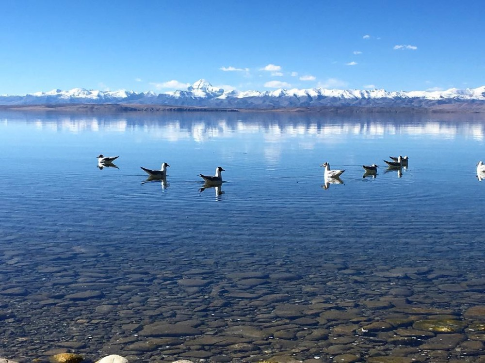 19D18N Tibet Plateau Changthang Crossing Private Tour. Day 8_Lake Mansarovar