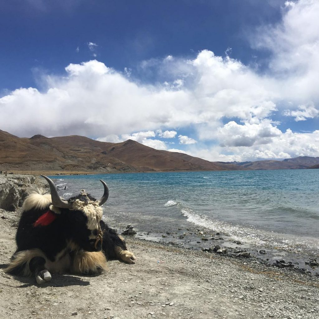 8-Day Central Tibet and Namtso Lake Private Tour. Day 4_Yamdrok Lake