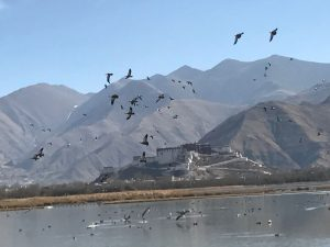 8D7N Tibet Birdwatching and Everest Base Camp Private Tour. Day 2_Birdwatching
